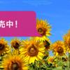 ピーチが成田-札幌・成田-沖縄線を廃止、2017年3月26日より