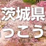 【茨城県ふっこう割】12月23日(月)からクーポン配布、宿泊期間は2020年3月15日まで